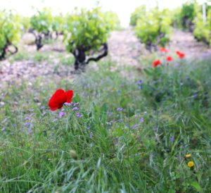 Read more about the article Le vin Biologique